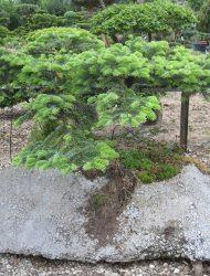 """Betonhügel"", Pflanzenbreite ca. 150"