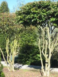 Schirmform ca. 380x400 (Pflanze li)