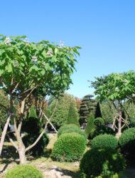 Schirmform ca. 290x230 - Pflanze links verkauft