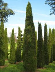 Toskana-Säulen